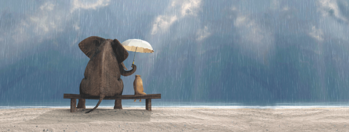 CFA-support-background-elephant-umbrella